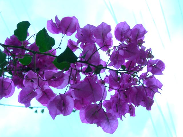 12 CU purple flowers.jpg